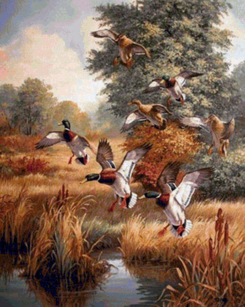 Именинами, открытки охота на птиц