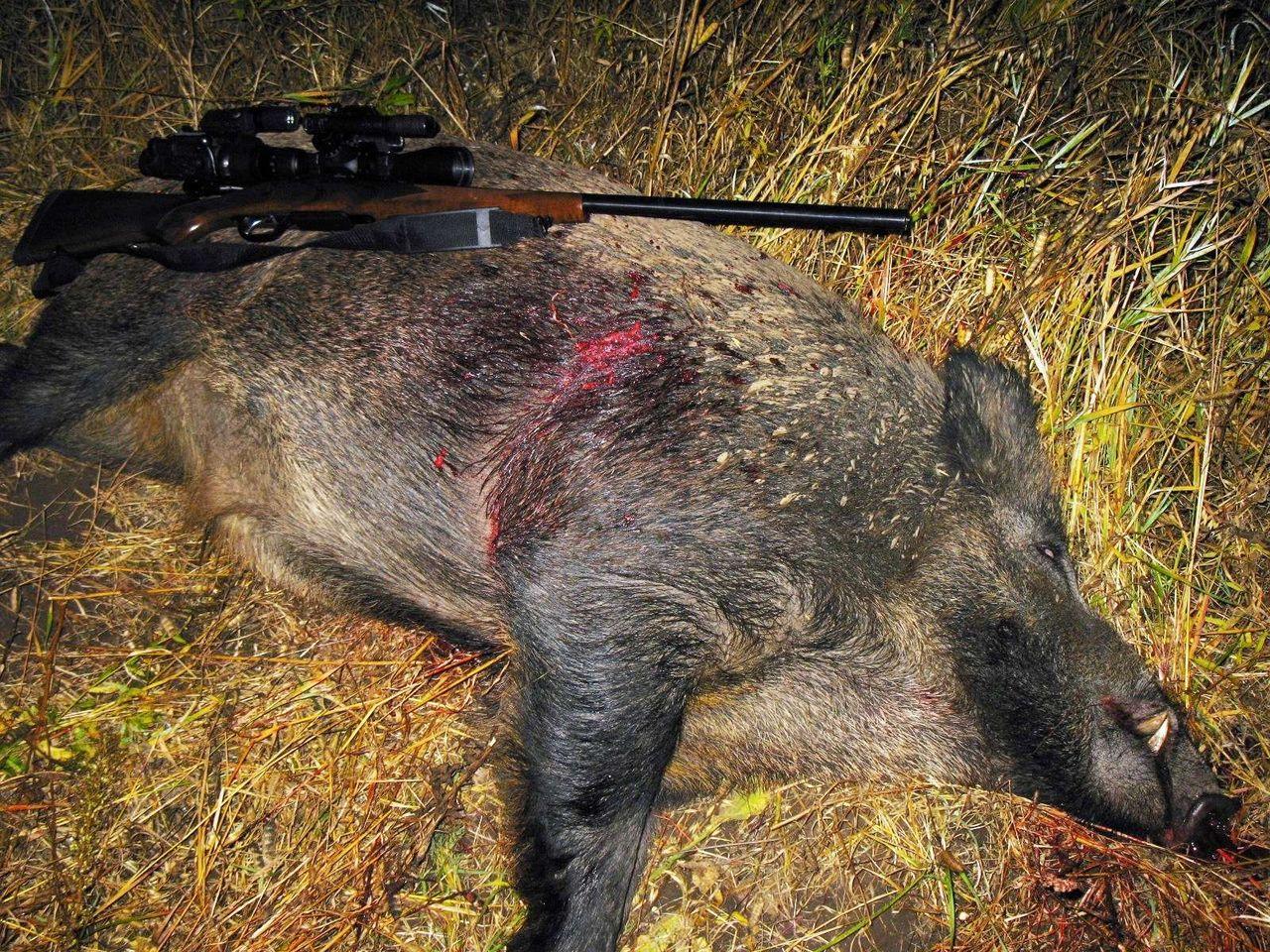результаты можно форум охотников орловской области собственника, без комиссии