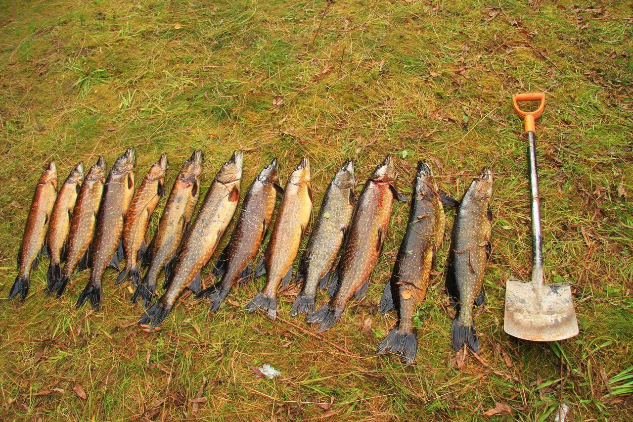 отдых и рыбалка в пудожском районе