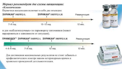 Ybsen приехал в Россию привитым Eurican по 2-ой схеме. как видим,по 1,классической схеме,щенок прививается два раза и...