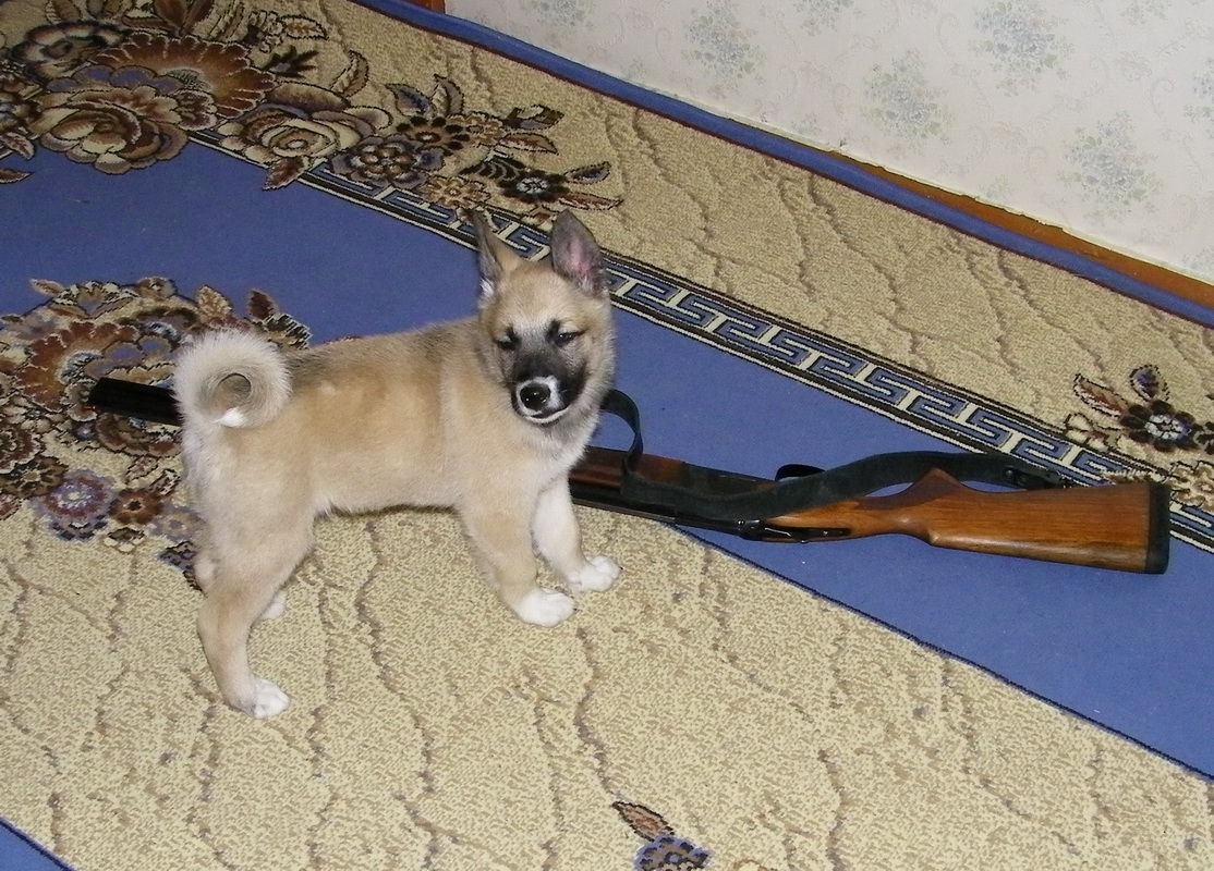 основные партнеры-туроператоры когда начали изучать породы собак Русское