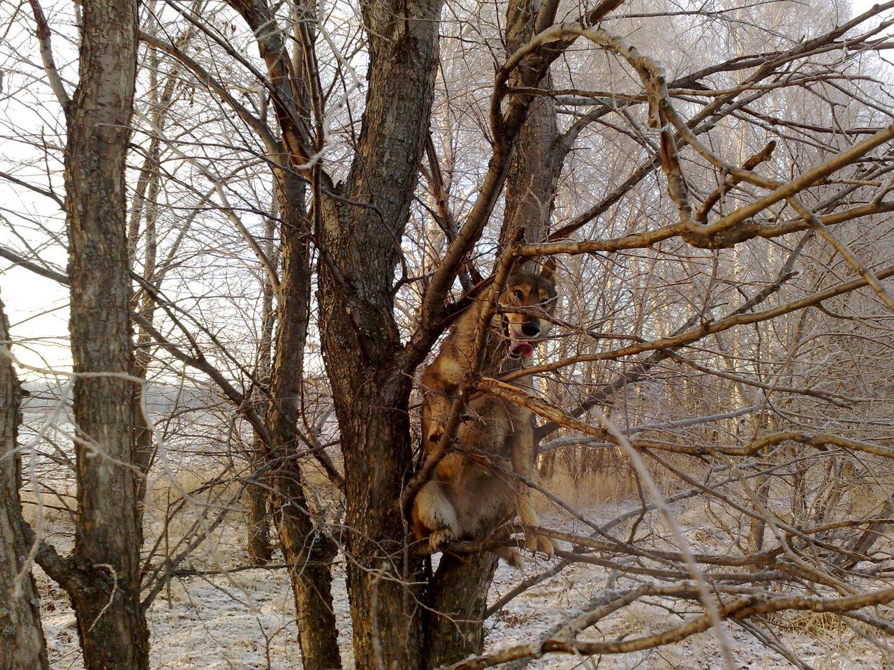 Сучки на дереве 3 фотография