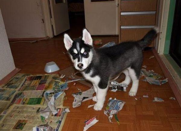 Хочу собаку в квартиру