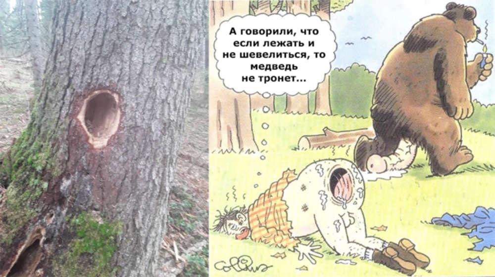 Прикольные картинки, картинка про медведя и охотника