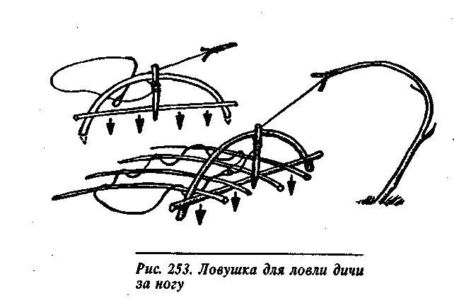 Ловушка на фазана своими руками чертежи 829