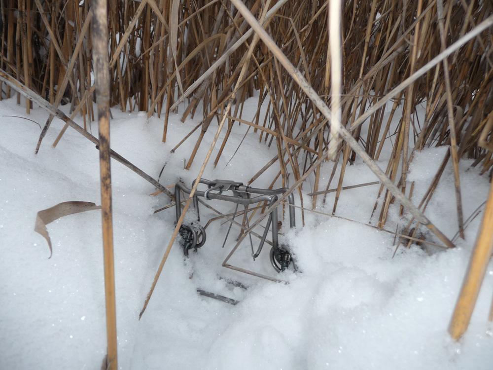 Ловушка на куропатку своими руками зимой