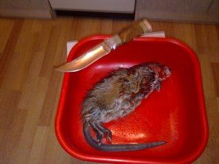 Как приготовить ондатру рецепт 61