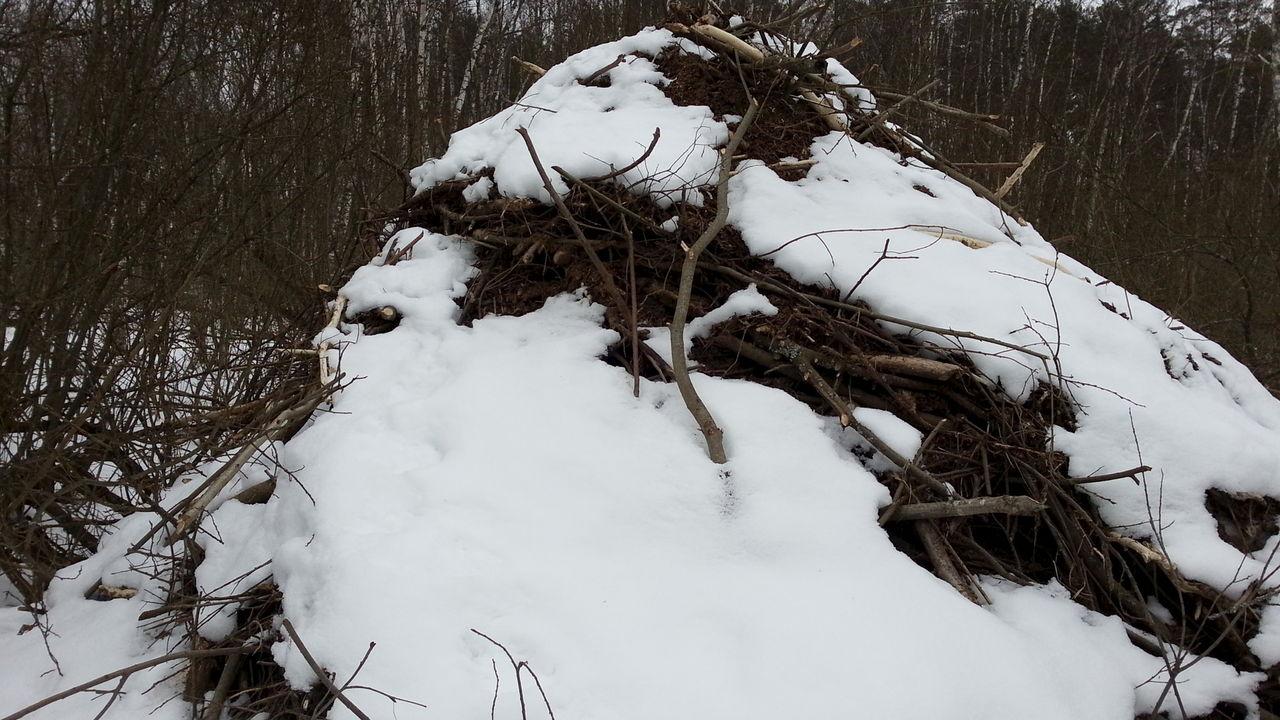 как бобры готовятся к зиме фото