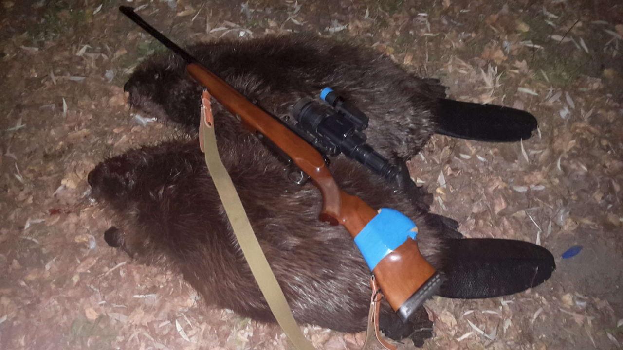 Мастурбирует охота на бобра с ружьем осенью разрывая плотину