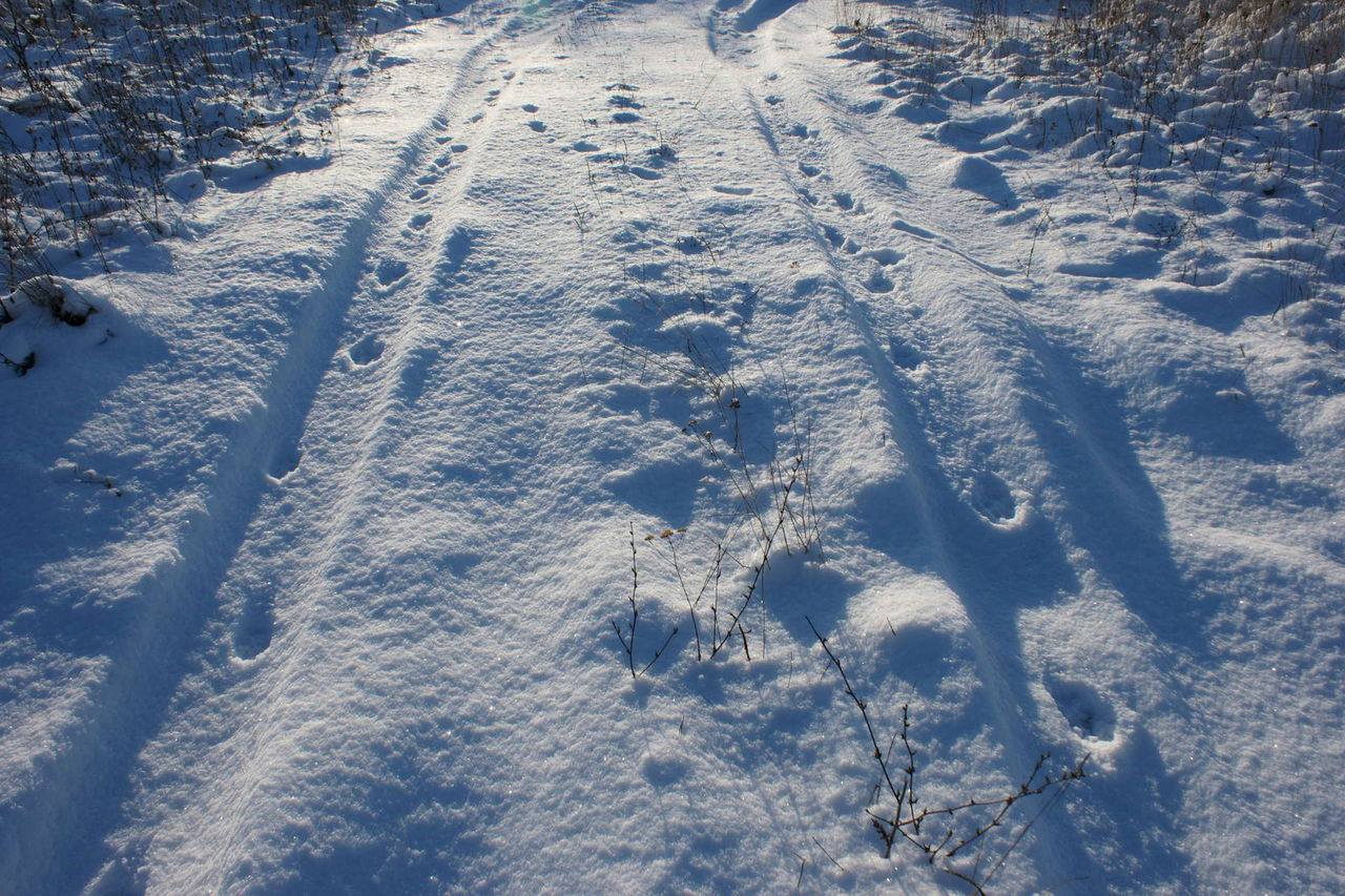 след волка на снегу фото этих фото