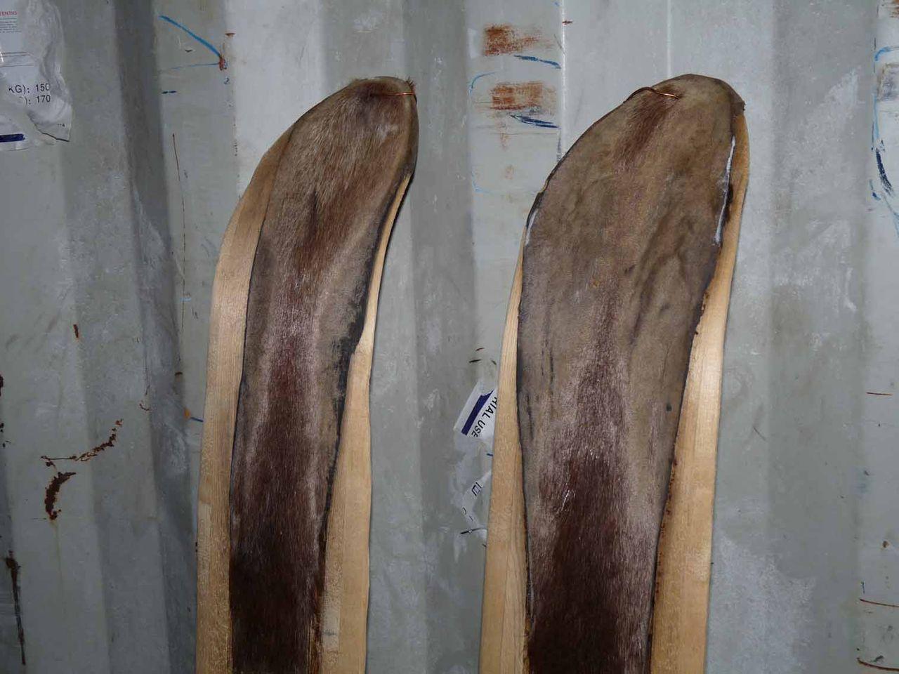 Камус на лыжи своими руками фото