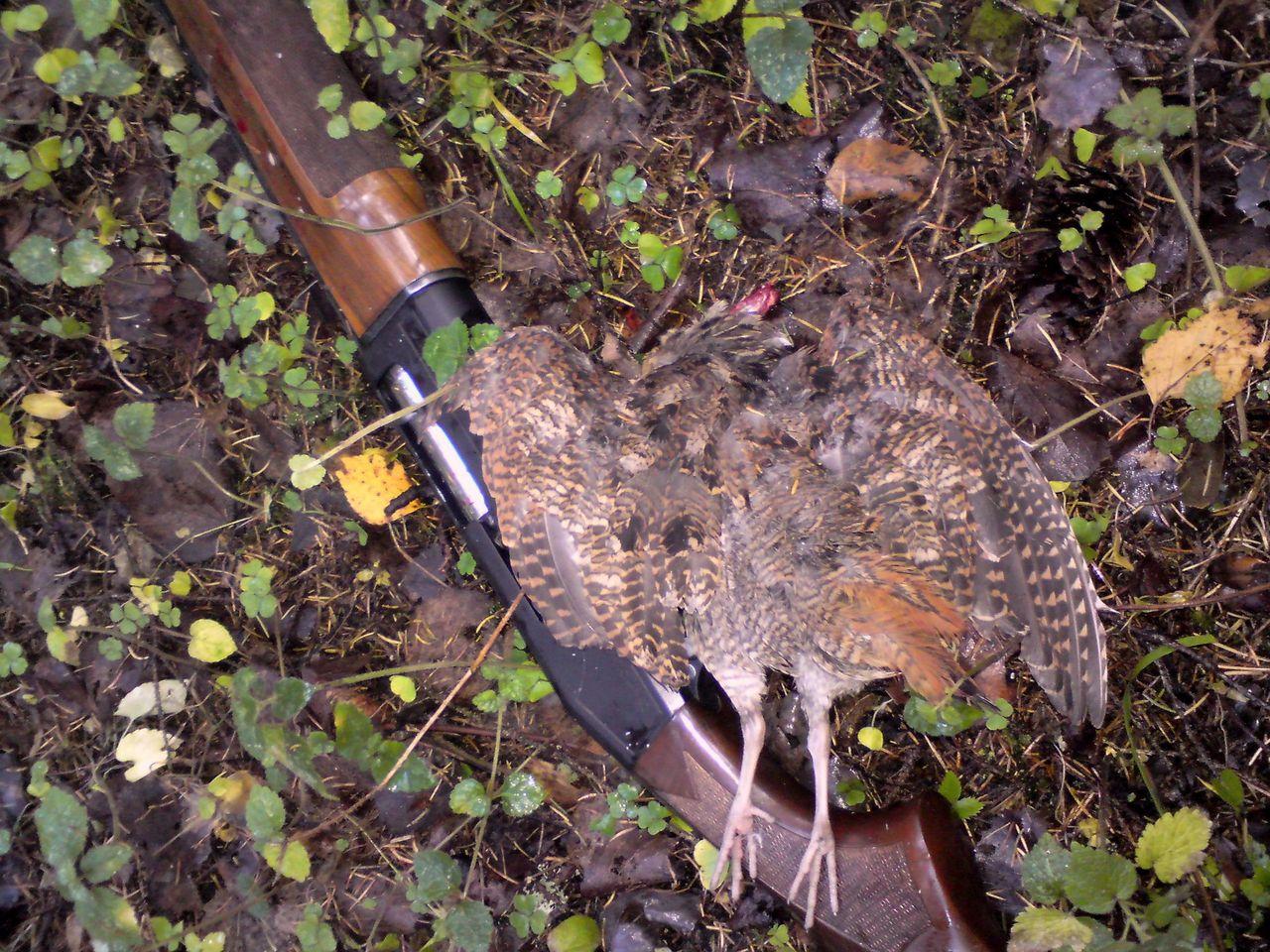 дробь для охоты на фазана далее термобелье