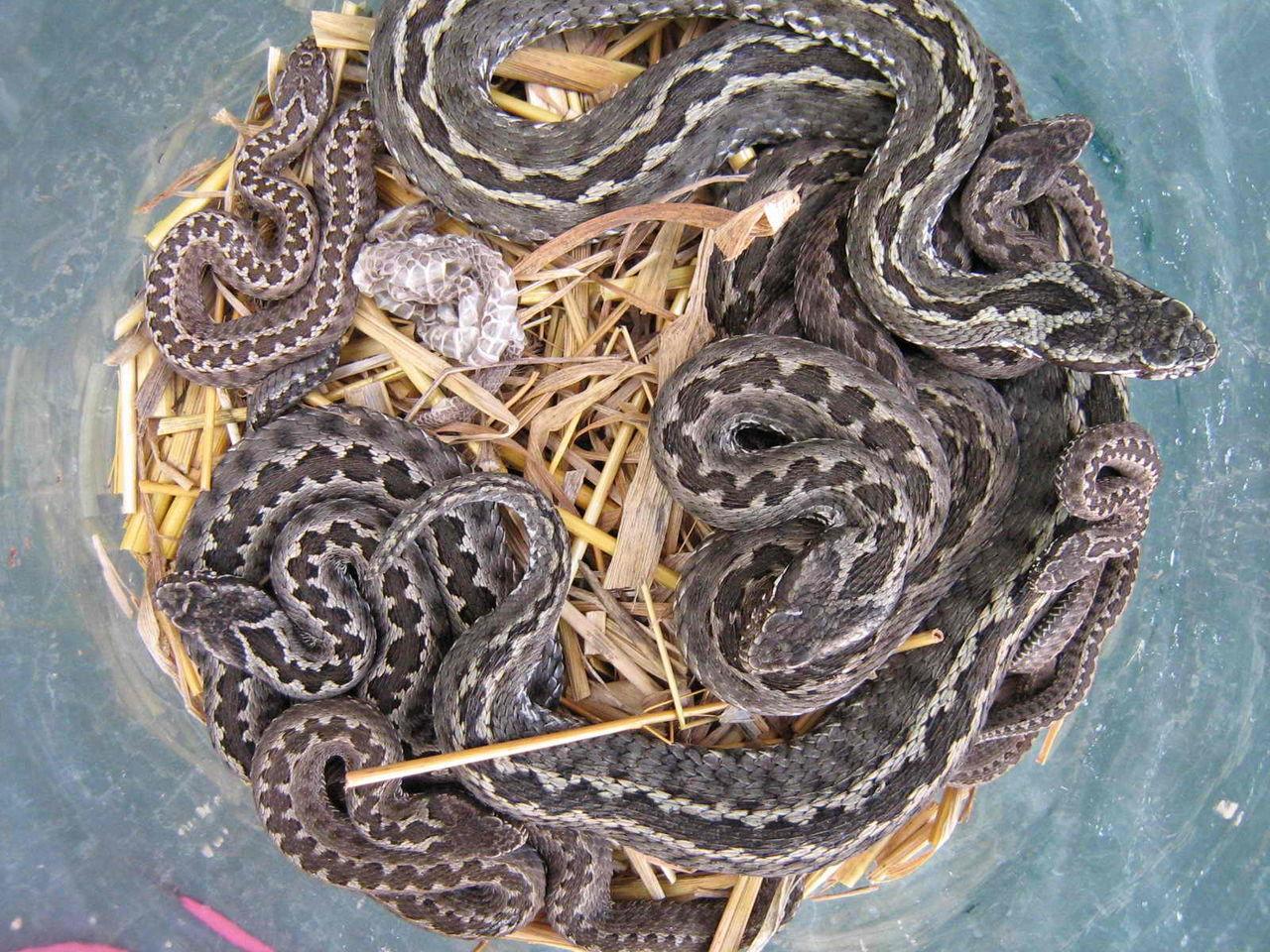 испугавшись клубок змей фото герман отлично