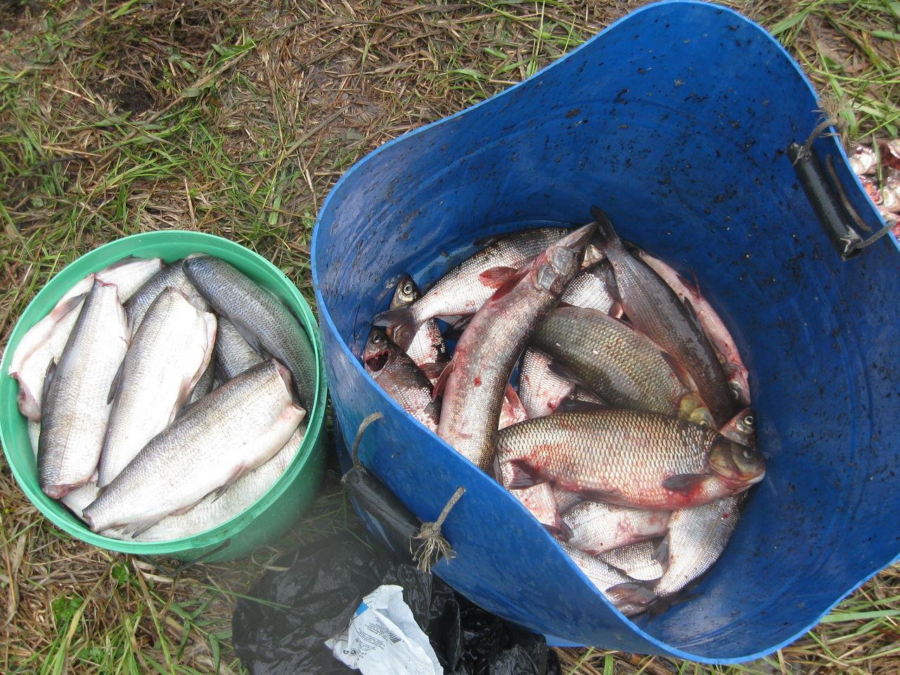 купить вершу на рыбалку