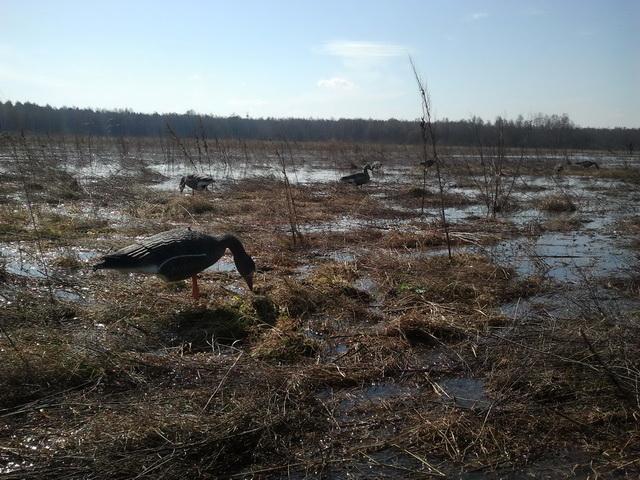 Отчеты о весенней охоты на гуся 2012 г. * Популярное оружие