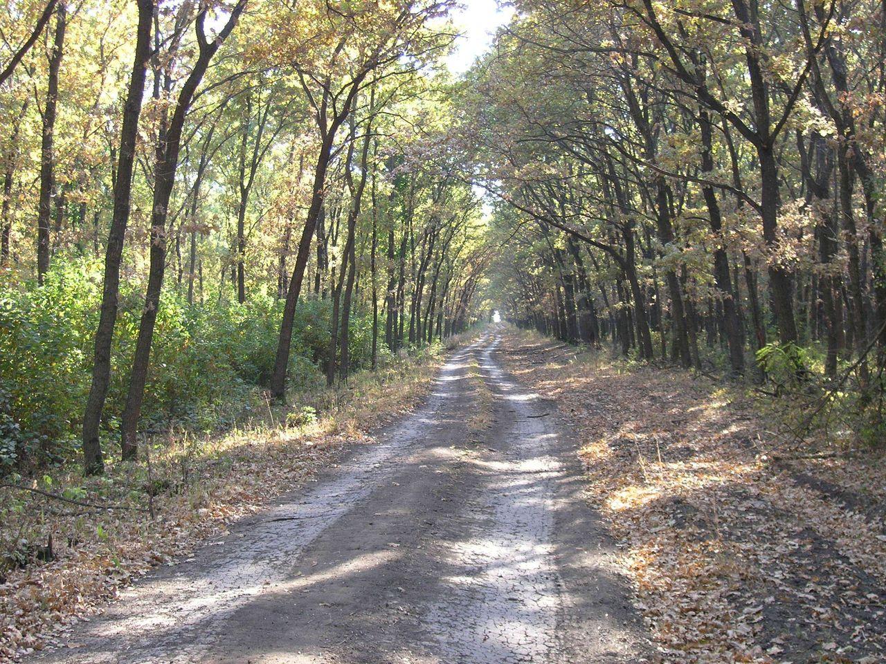Александровский лес ростовская область фото