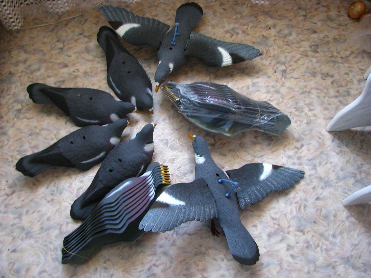 Магнит на дикого голубя 5