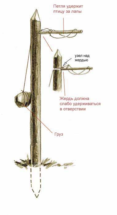 Как сделать ловушки для птиц