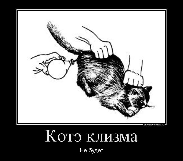 Как сделать клизму котенку в домашних 726