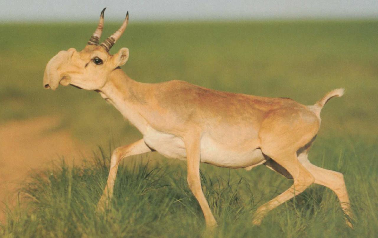 Животные казахстана картинки для детей
