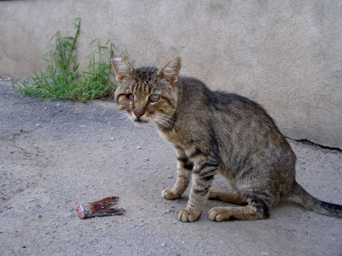 Картинка бедного кота
