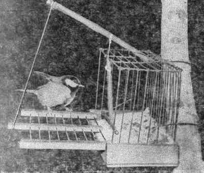 Ловушка для голубей своими руками фото