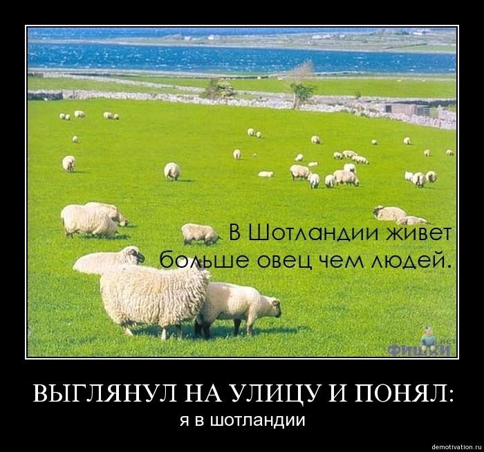 объявления демотиваторы про овец сожалению