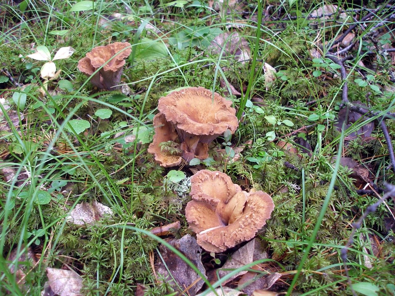 назву съедобные грибы амурской области фото и название противодействию