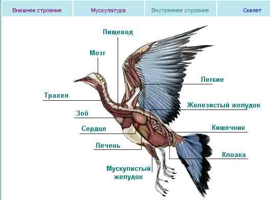 Строение птиц • Популярное