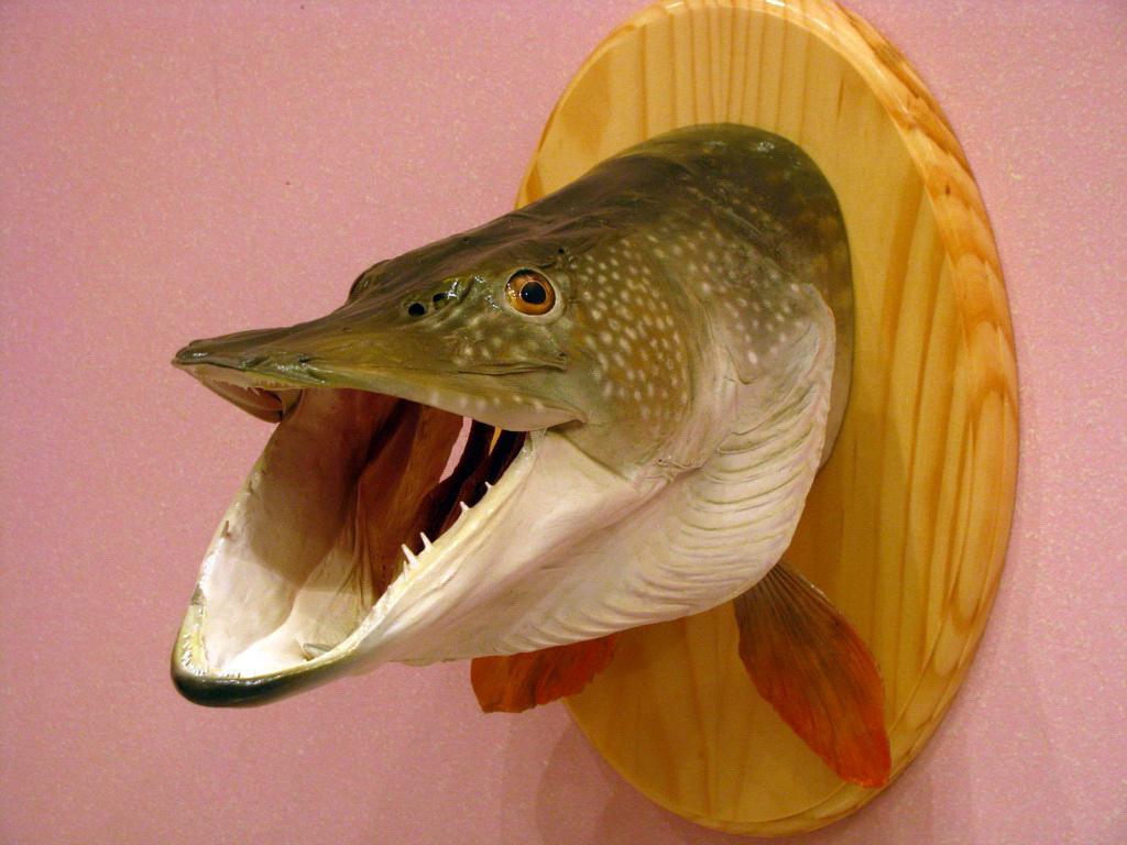 чучело в рыбалке