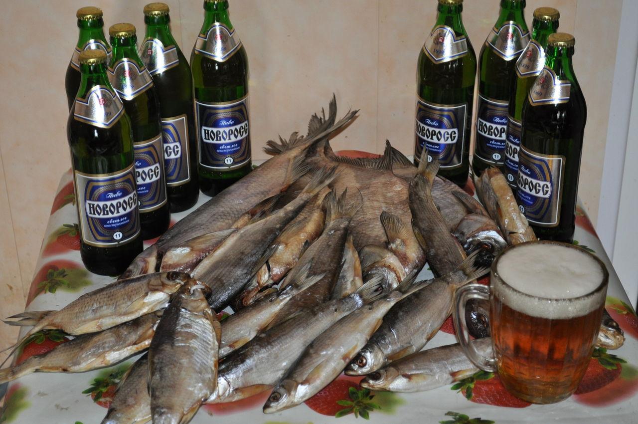 Прикольные картинки рыбка с пивом, советы