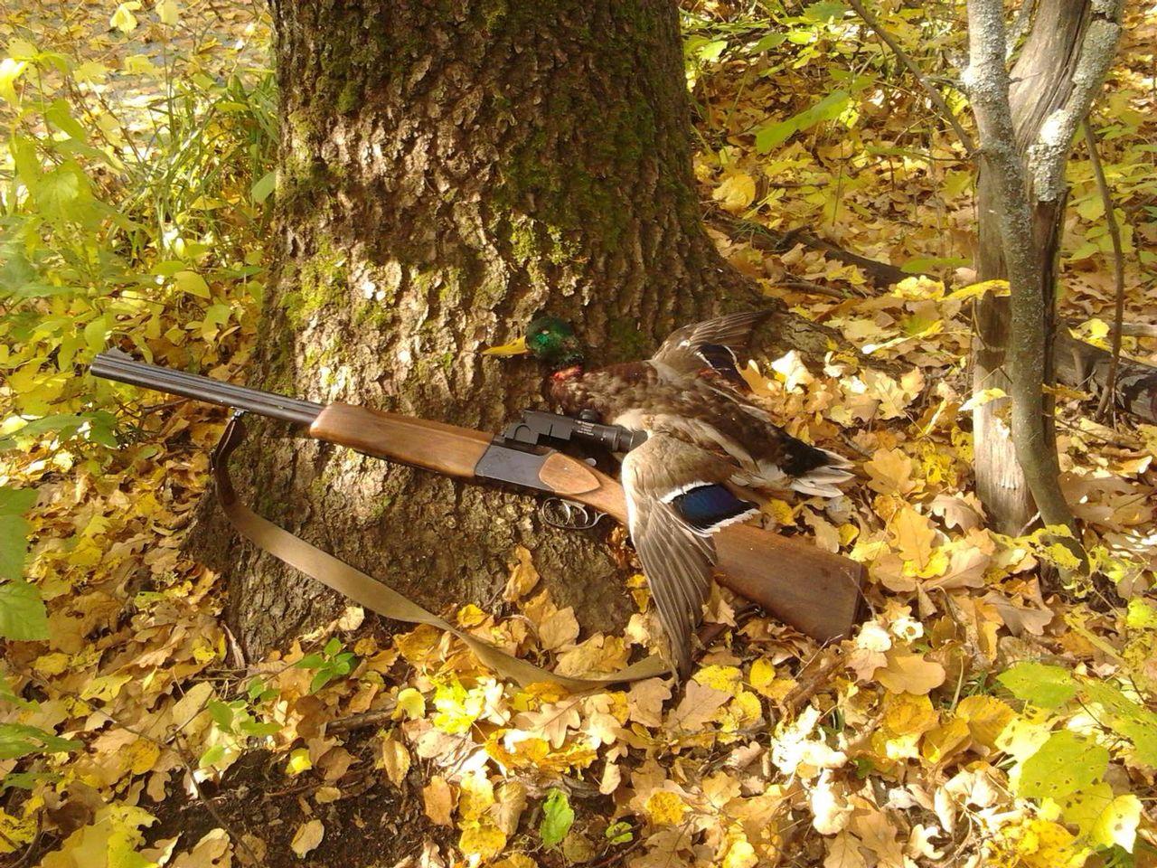 Фото с охоты в лесу