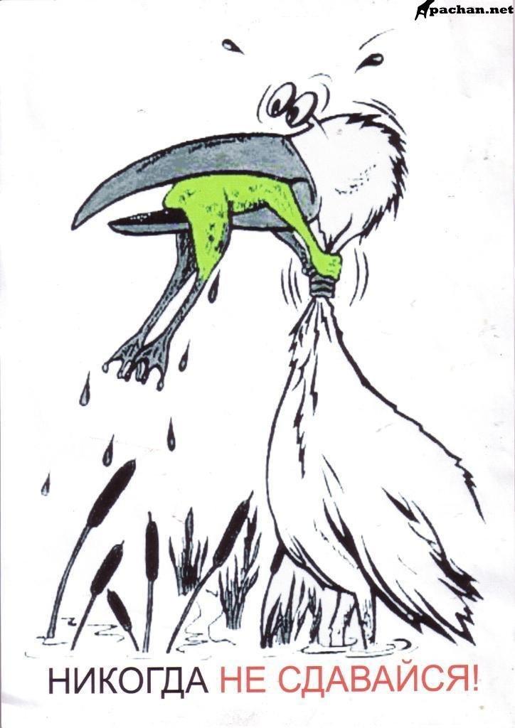 Рисунок пеликан с лягушкой в пасти