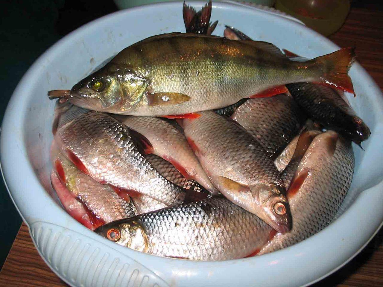 не уступающим экзотическим рыбам ни в поведении, ни в окраске, но требующим не меньшего внимания