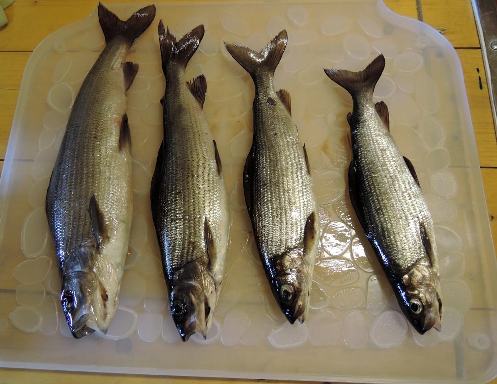 рыбалка в соколе вологодской области