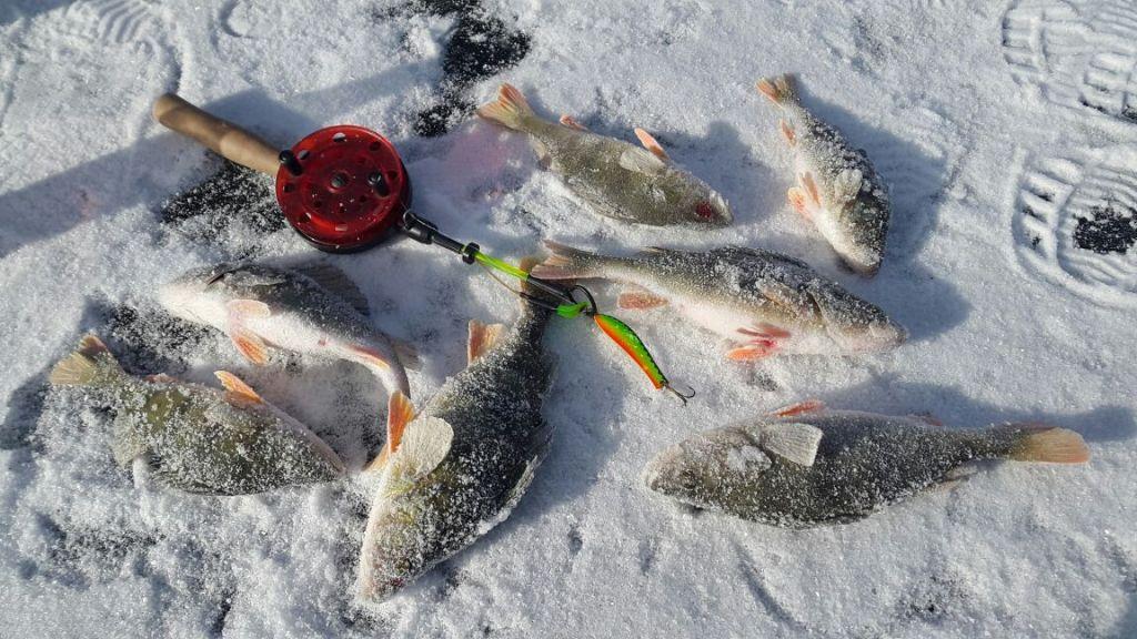информеры рыбака
