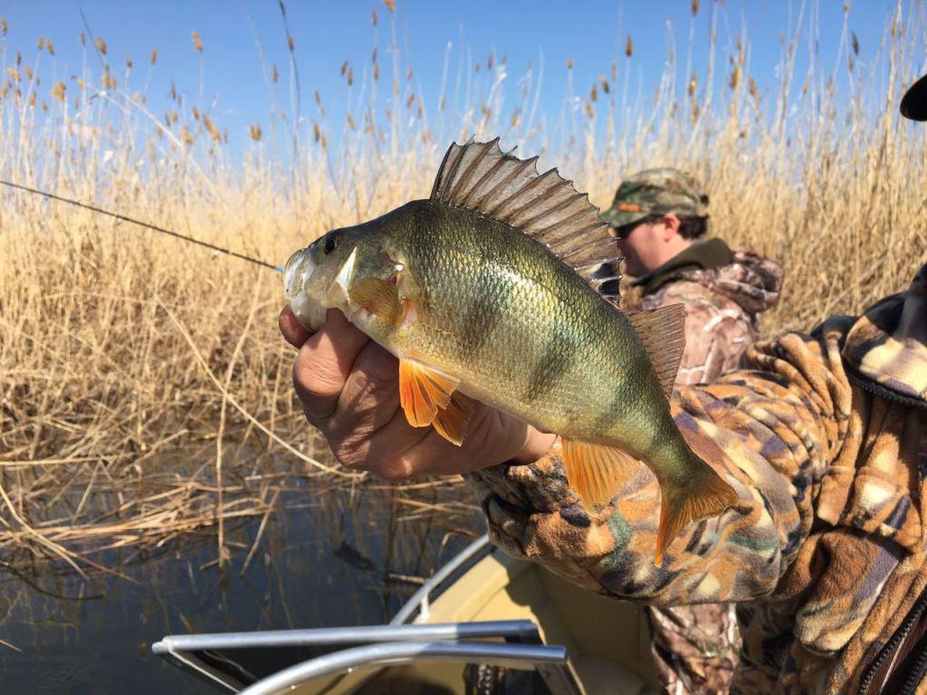 платная рыбалка в подмосковье в все