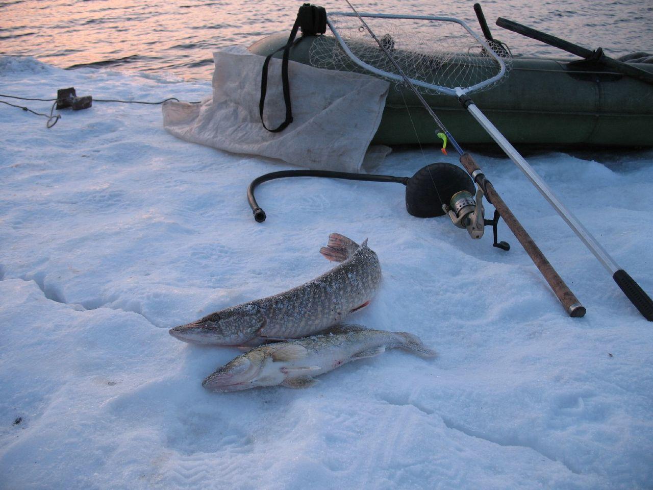 ловить рыбу в тюмени