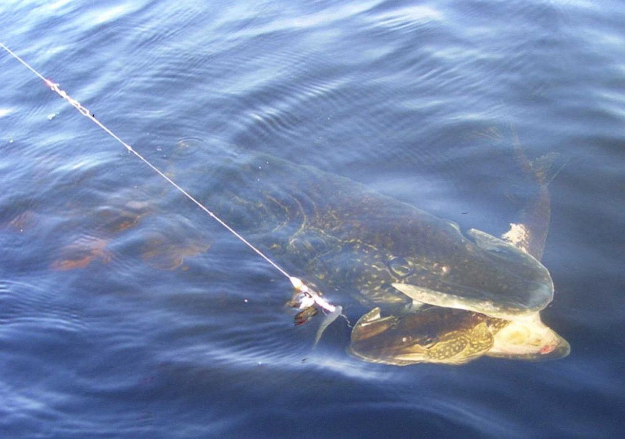 как поймать рыбу сегодня