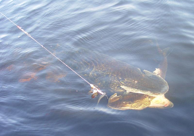 открытие рыбалки на озере брынь