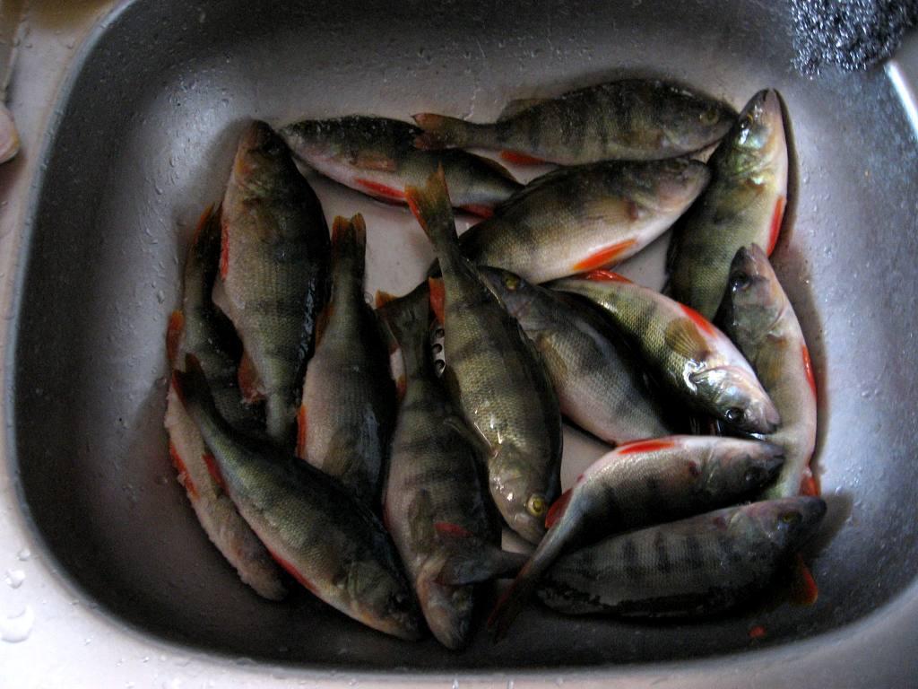 зимния рыбалка курганская обл