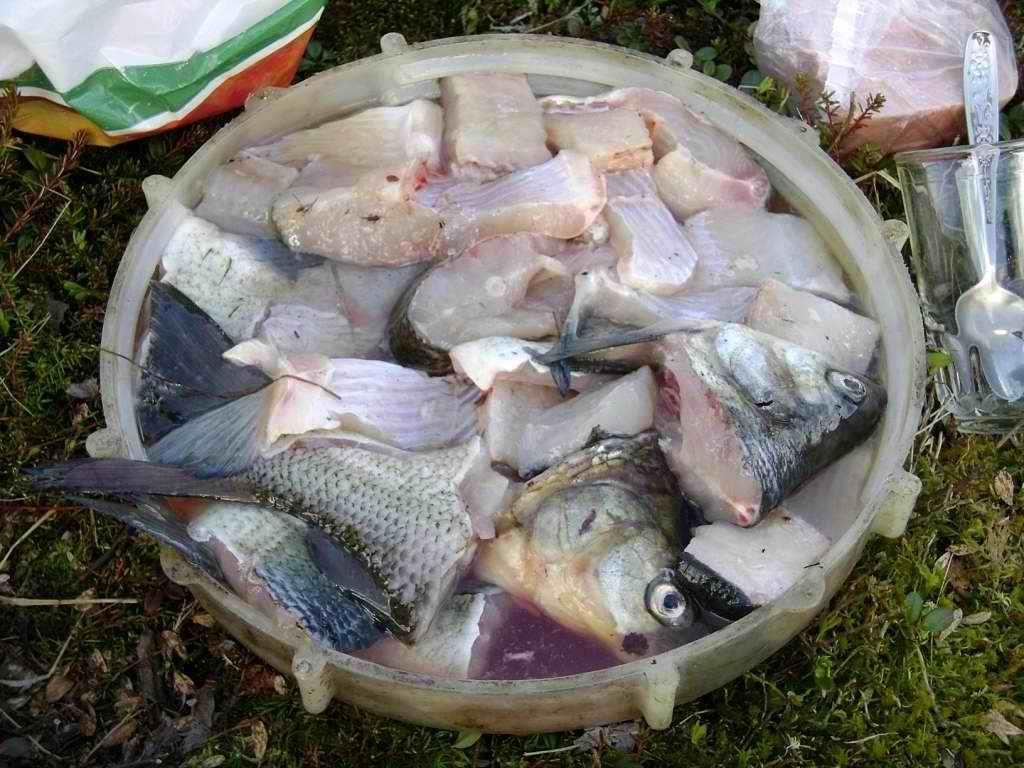 как засолить хариуса на рыбалке