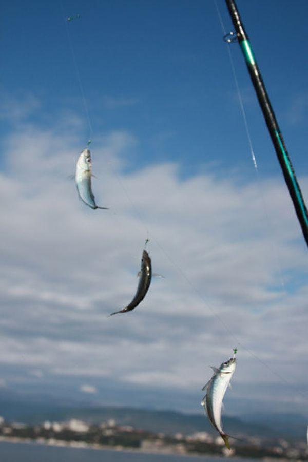 на что ловить ставридку в море