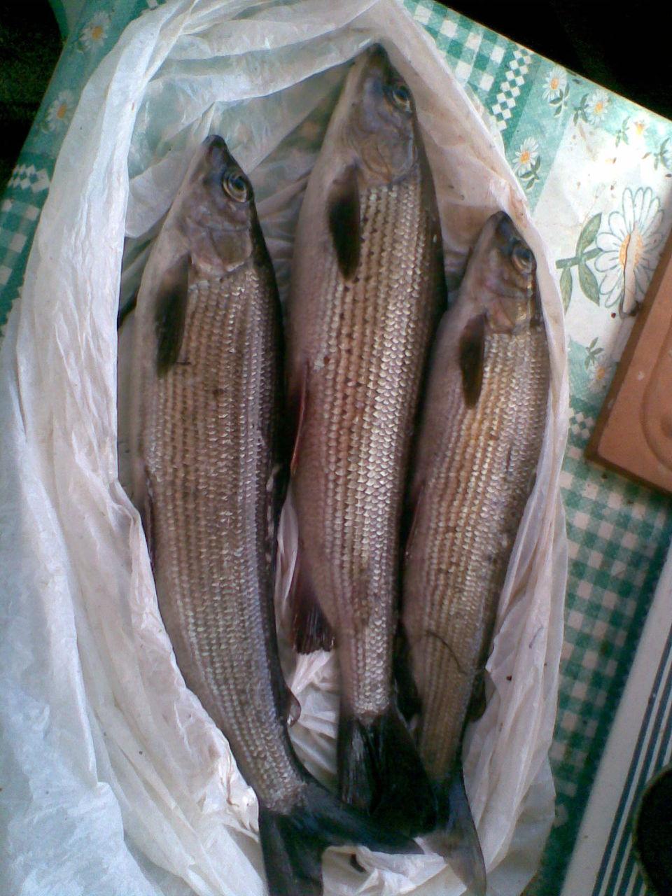 черви для осенней рыбалки