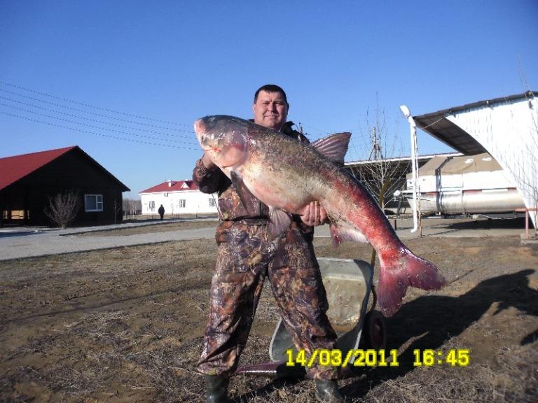 рыболов курганинск