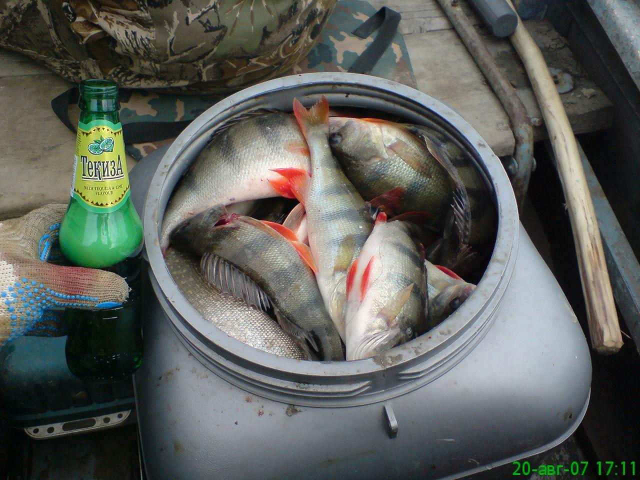 супер клев рыбы