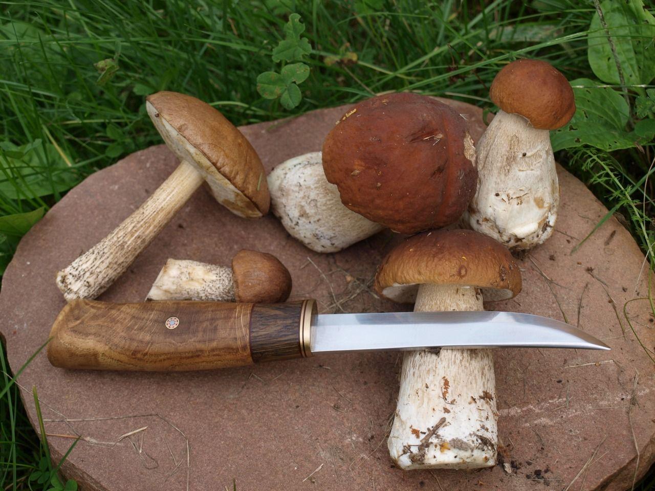 Картинки по запросу грибы нож