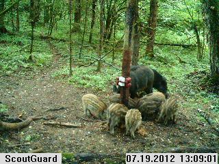 как ловить животных в лесу