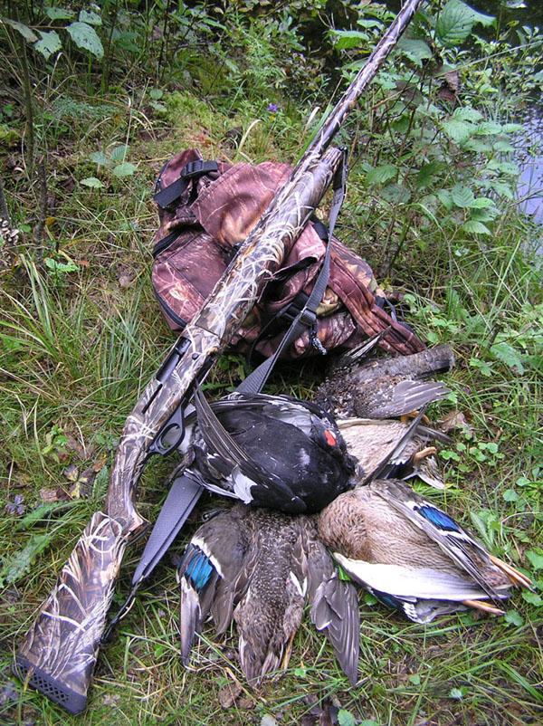 Лазаревское сентябрь мр-155 охота на кабана отзывы охотников пятнадцатый Предстоятель