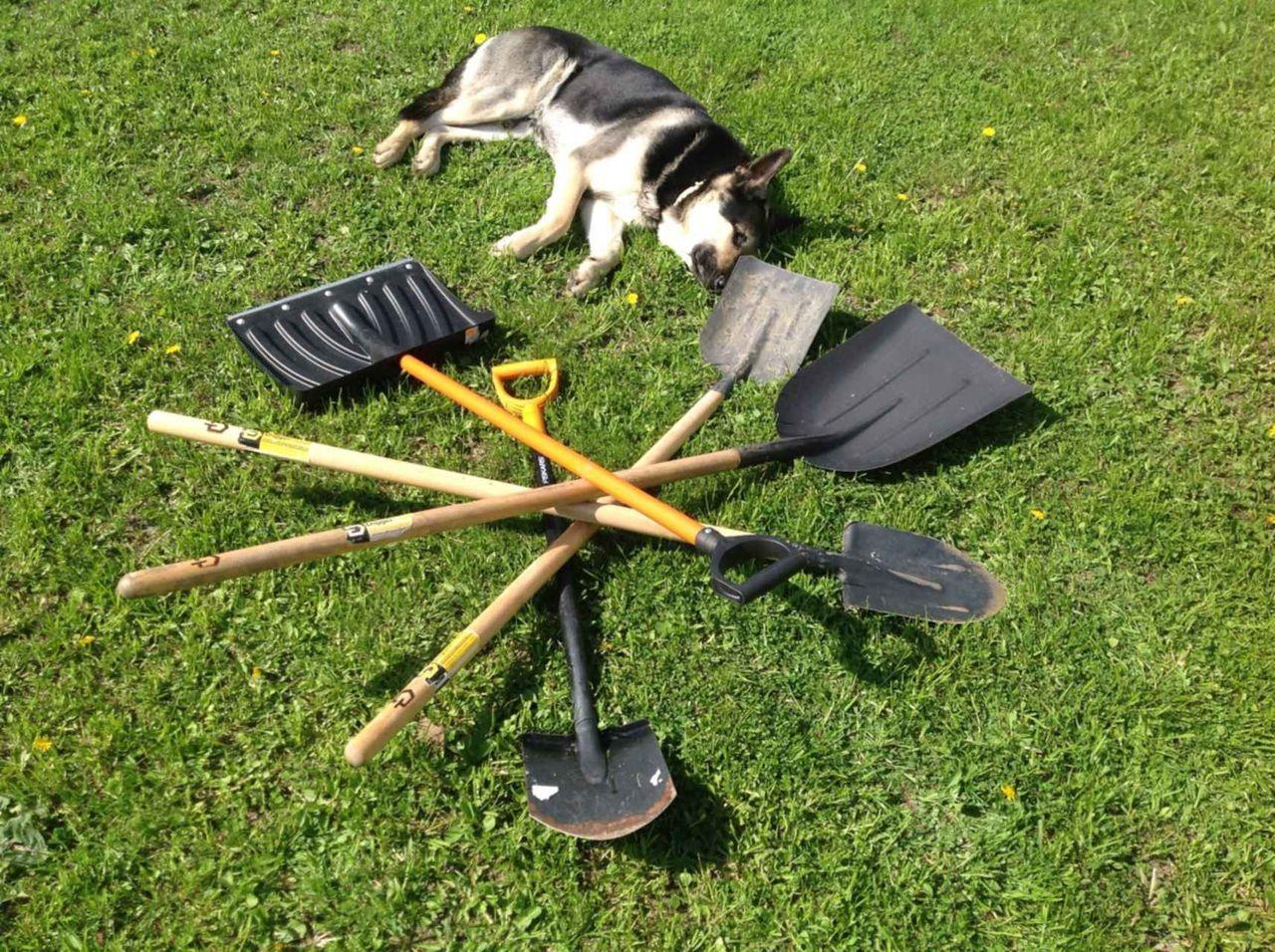 картинки лопата и дача начале